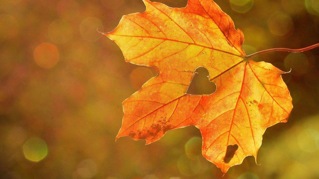 葉モチーフが持つ意味とは?葉のデザインが好まれる業態やロゴデザインをご紹介!