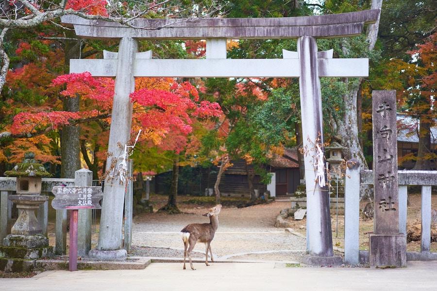 奈良県のクリエイター支援の取り組みとは?創業支援から移住サポートまで!